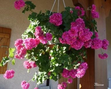 Fleurs d'automne (16)