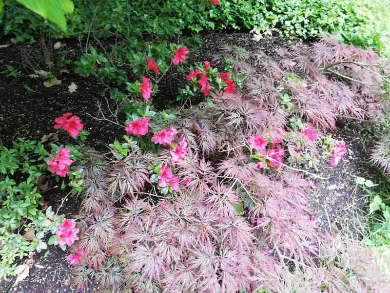 Parc de la marquise - suite - les petites fleurs