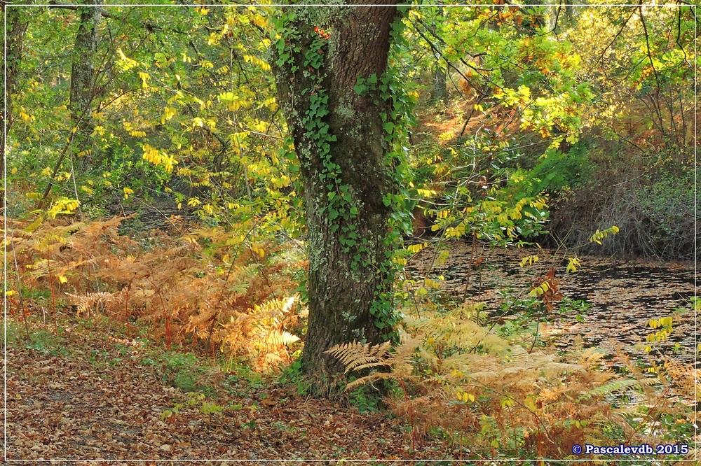 Automne au parc de la Chêneraie à la Hume - Octobre 2015 - 1/7