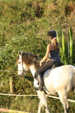 les cours pour les cavaliers propriétaires et demi-pensions