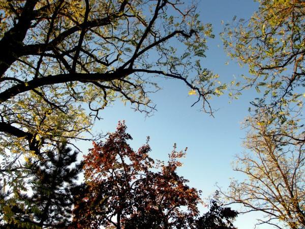 r02---branches-et-ciel.JPG