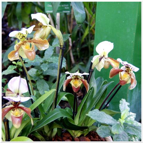 Exposition Orchidées 2016