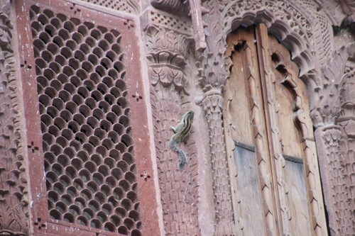 Fort de Mehrangarh de Jodhpur (suite)