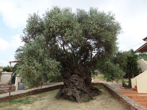 Des arbres tutélaires