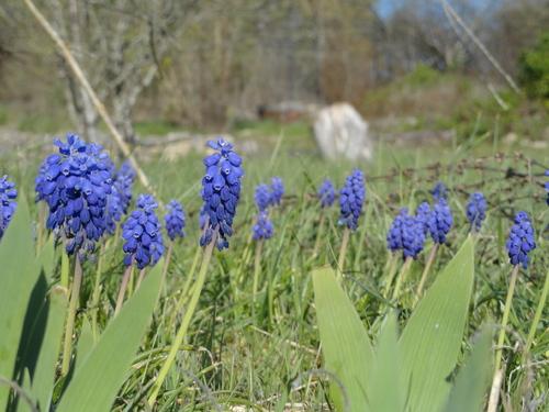 Bonjour joli printemps!