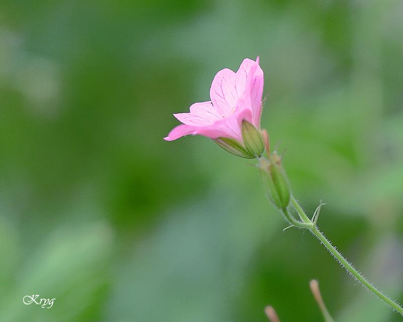 Fleurs:Un peu de tout ...