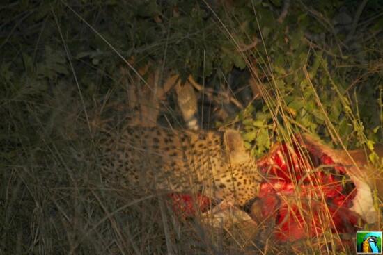 Afrique du Sud : Juin 2018: Nouvelles découvertes dans ce safari 2/2