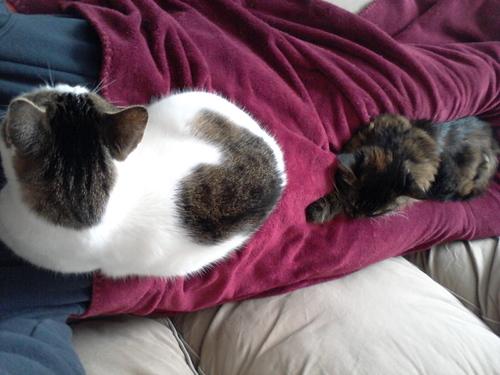 Les chats et les maladies