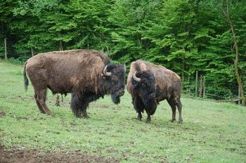 Parc animalier Bouillon 2013 enclos 287