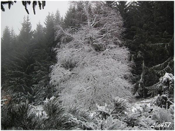 DSCF1806-arbre-en-blanc.jpg