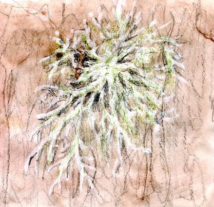 - Santé-Bien être - 16 -  L'union fait la force  - le lichen -