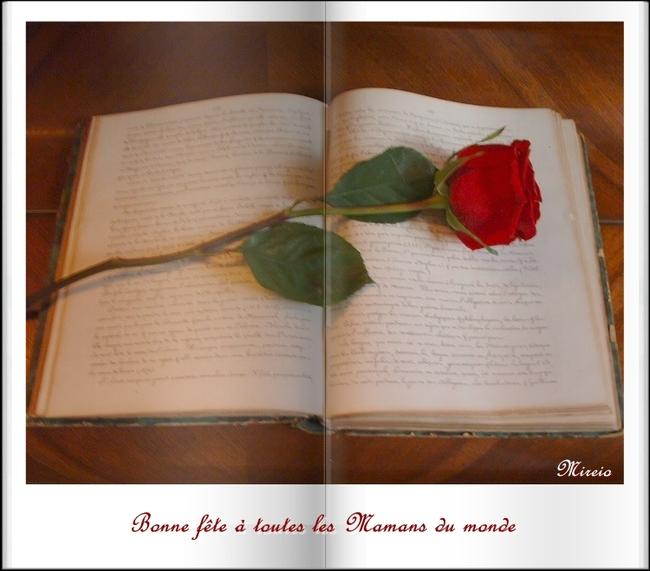 Un poème...Une rose ...