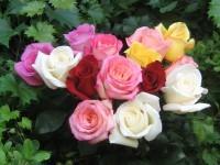 roses bouquet 3565