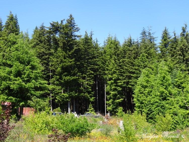 Nouvelles du Canada 130 : J'aime cet environnement