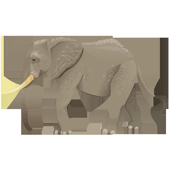 tubes éléphants