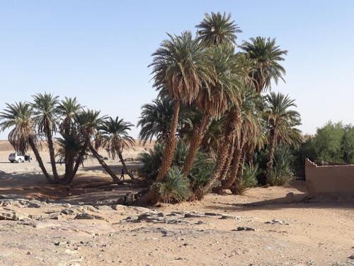 L'oasis sacrée