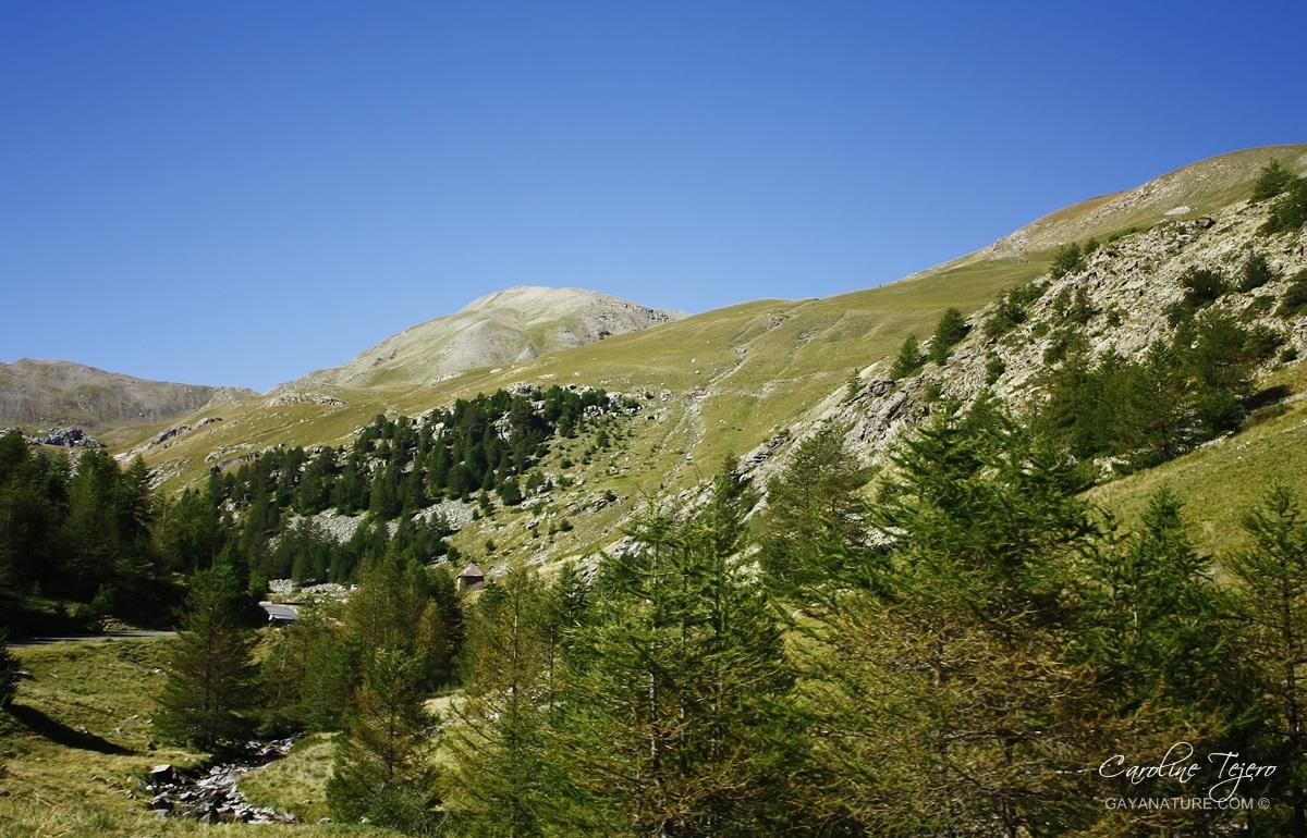 Col de la Bonnette, Alpes de Haute-Provence