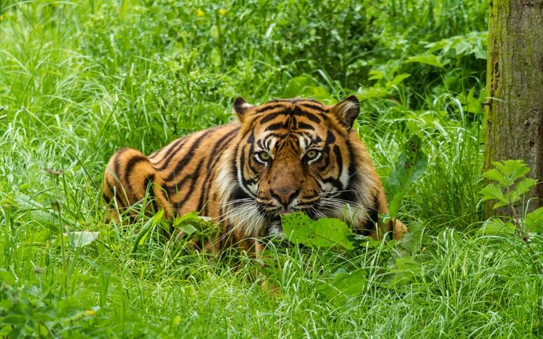 15 photos d'animaux-2