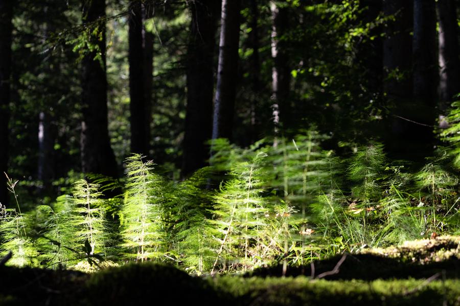 forêt Jacquicourt