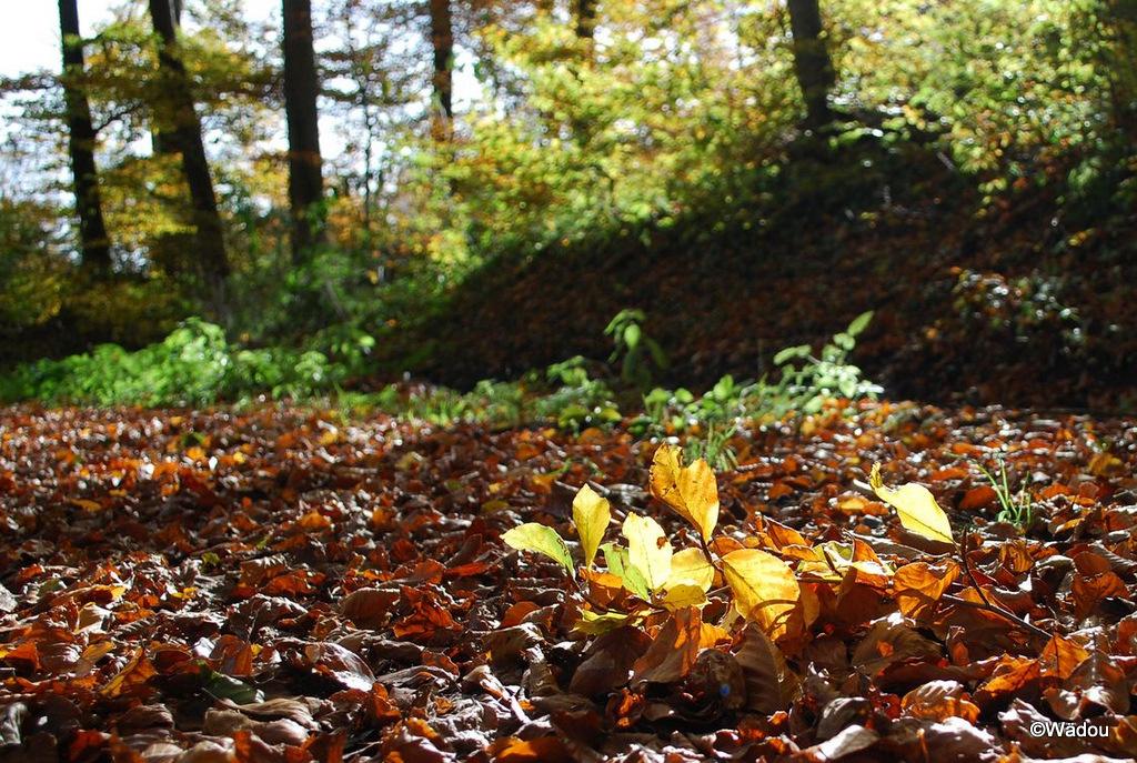 L'automne, deuxième volet