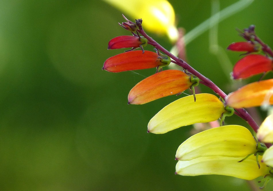 La nature, fin août !