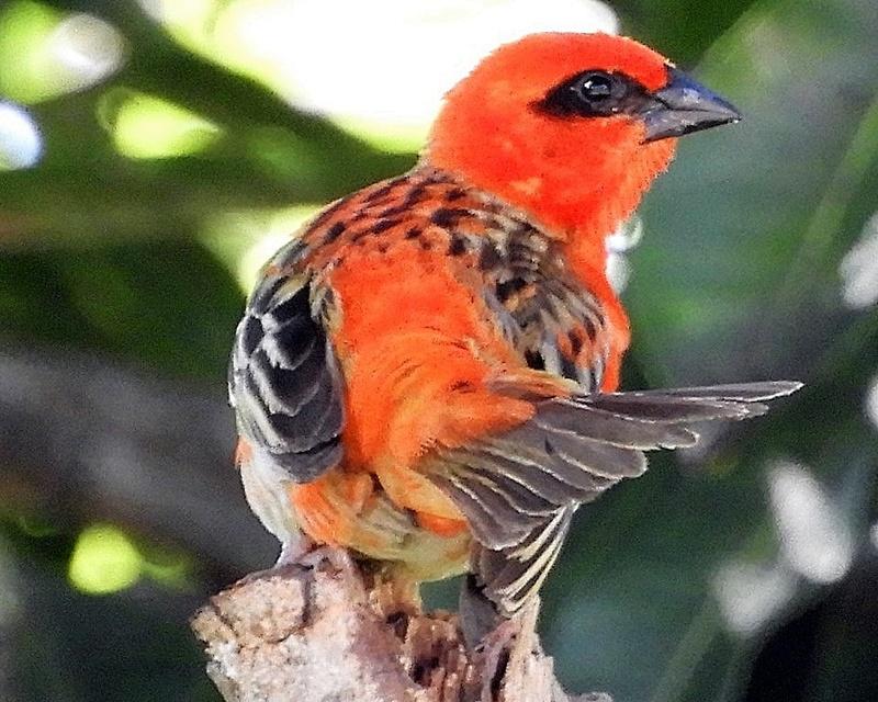 PHOTOS (oiseaux, fleurs, paysages... à la Réunion