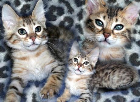 jandro8295753-bw-leopard-peau-arriere-plan-ou-la-texture-grande-resolution