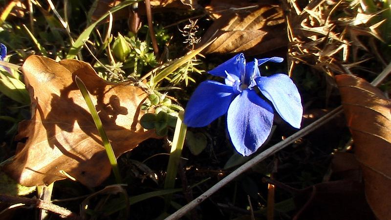 Flore des Pyrénées (Images de mon ancien blog, année 2007)