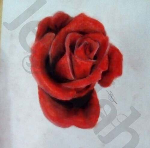 Rose à la pastel