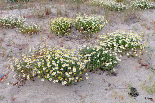 Fleurs dans le sable
