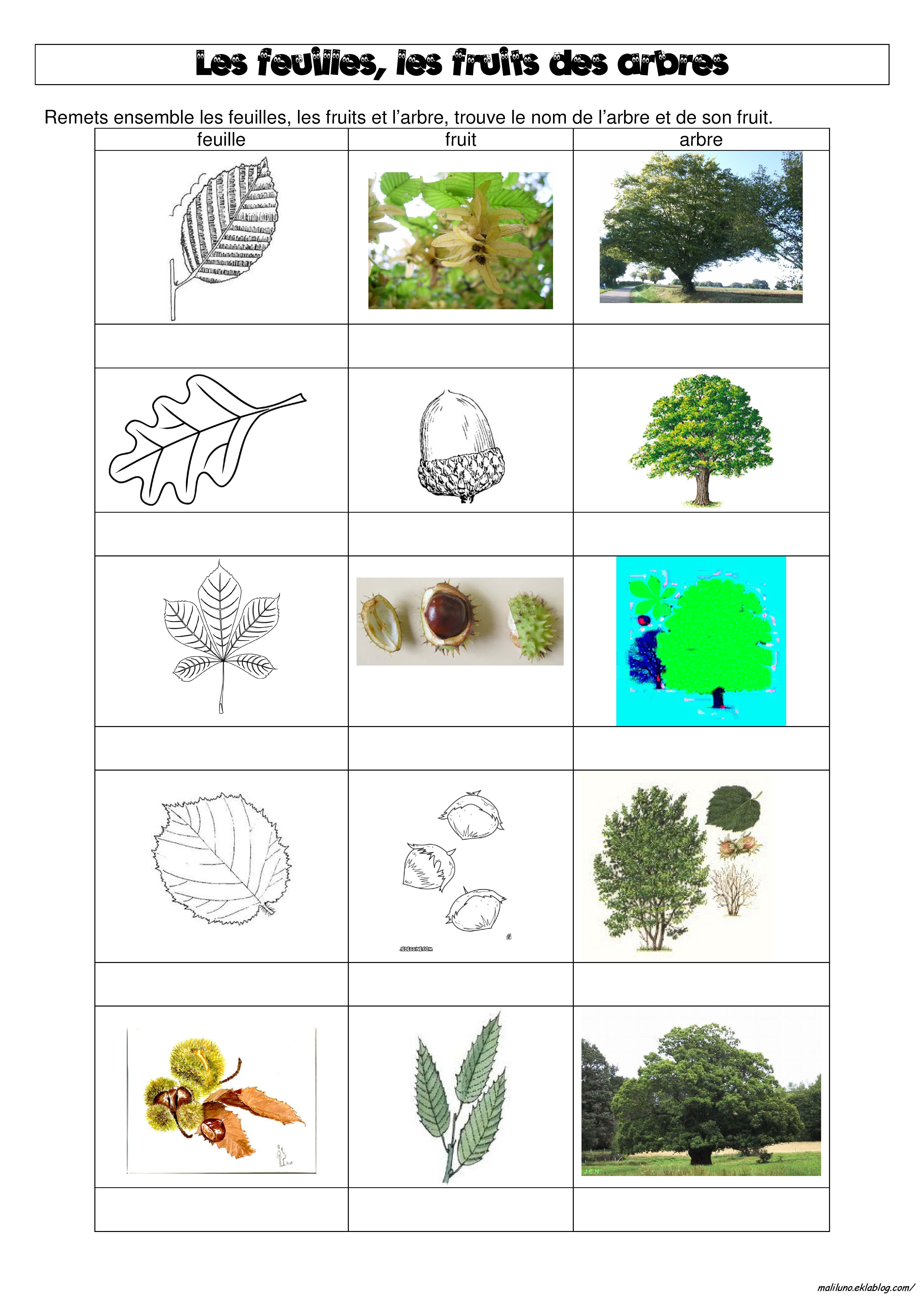 DDM : les feuilles, les fruits et les arbres de notre bois - Chez ...