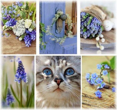 Collages fleuris
