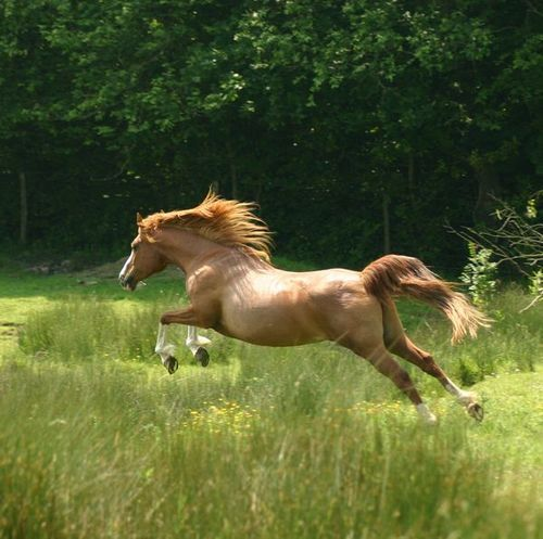 Horse Running Through a Meadow - PLEASE FOLLOW MY NEW BOARD (Horse 2)  Thanks!!