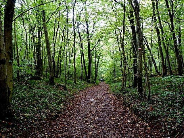 Forêt lorraine 4 Marc de Metz 2011