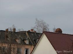 Ciel d'Alsace 446