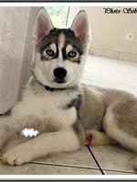 Neïko (3,5 mois)