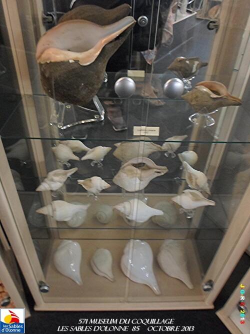 MUSEUM DES COQUILLAGES  vacances 10/ 2013 SABLES D'OLONNE    06/12/2013