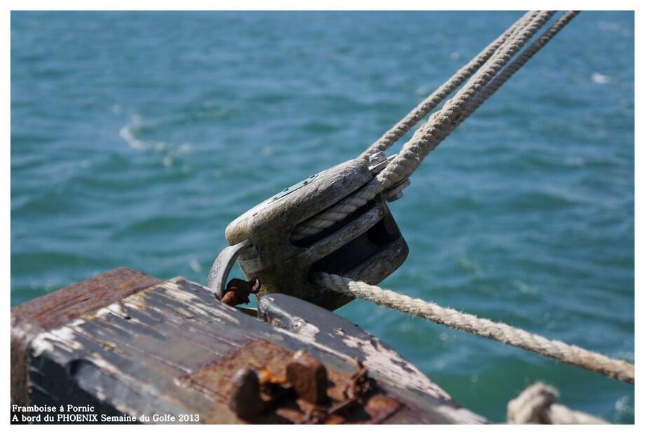Semaine du Golfe à Bord du Voilier PHOENIX