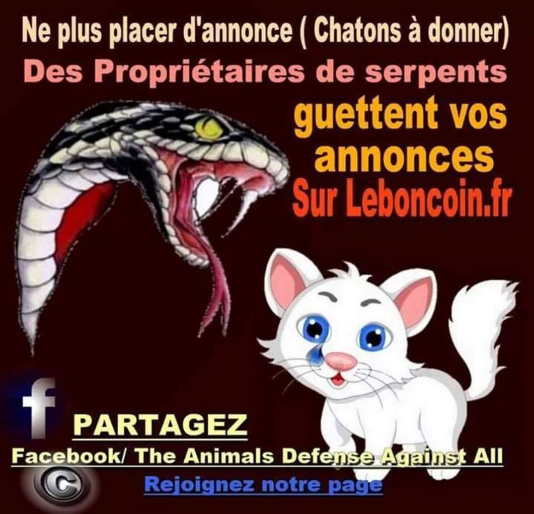 Chatons, chiots, lapins ...