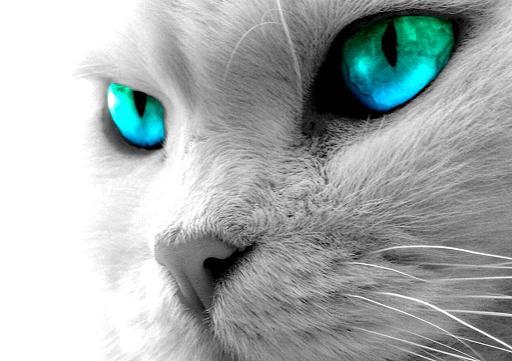 Trop mimi les chatons blog of the cat - Image de chaton trop mimi ...