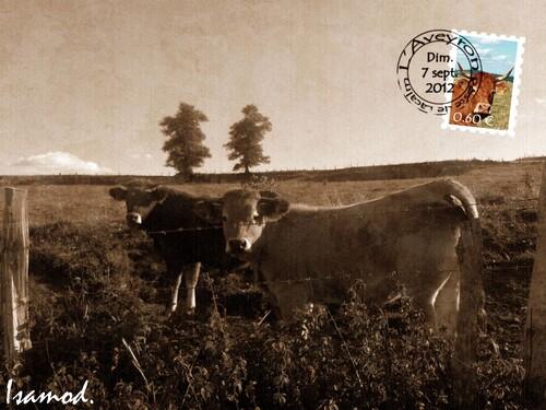 05 - Des vaches en cartes postales