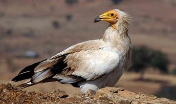 Les oiseaux migrateurs sont aussi en danger ...