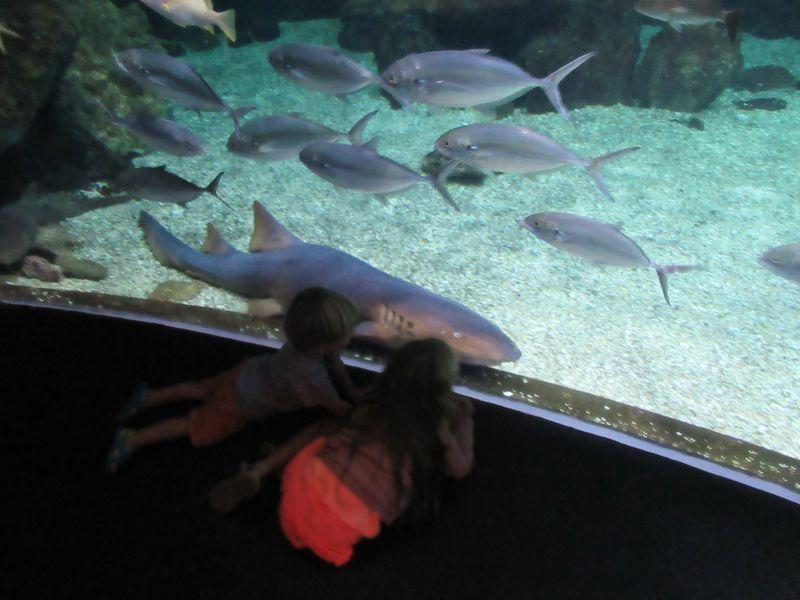 Itinéraire de 4 jours en Guadeloupe... sous la pluie : Memorial ACTe et Aquarium de Pointe à Pitre