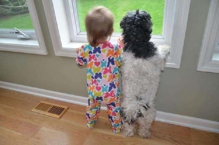 Connience des enfants et des animaux.