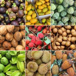 Découvrir les fruits locaux