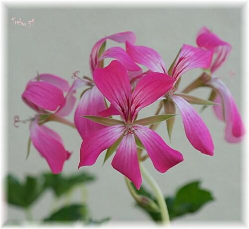 Quelques fleurs de ces dernières semaines