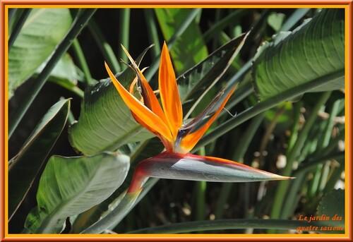 Fleurs tropicales 2ème série