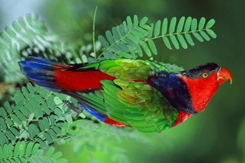 Divers types de perroquets
