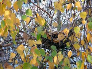 Chronique des jours d'automne - chronicle of the autumnal days