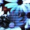 fleurs_152.jpg